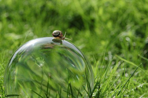 snail-2946075_640