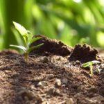成長 進化 環境コンサルティング